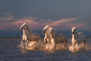 Angels of Camargue by Rostov.Foto@Gmail.Com