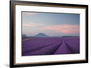 Lavender Field by Rostovskiy Anton