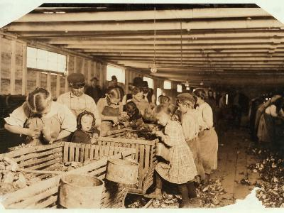 Rosy Aged 8 Works a 14 Hour Day as an Oyster Shucker at Dunbar Cannery, Louisiana, 1911-Lewis Wickes Hine-Photographic Print