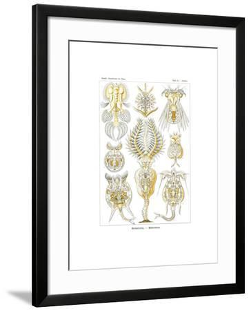 Rotatoria, 1899-1904--Framed Giclee Print