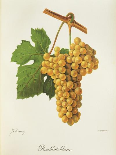 Roublot Blanc Grape-J. Troncy-Giclee Print