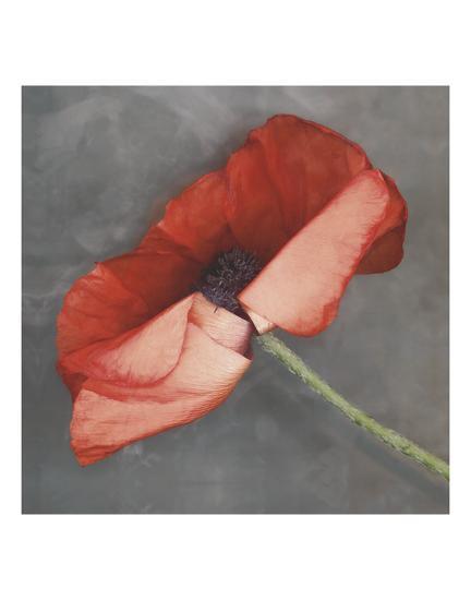Rouge-Erin Clark-Art Print