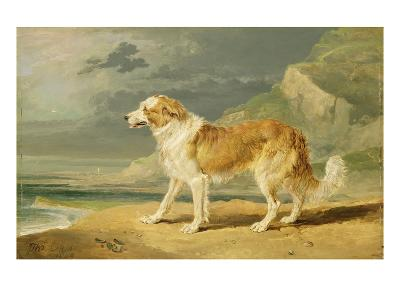 Rough-Coated Collie, 1809 (Oil on Board)-James Ward-Giclee Print