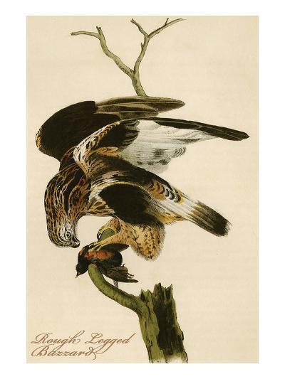 Rough Legged Buzzard-John James Audubon-Art Print