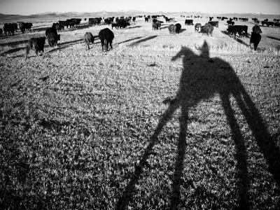 Round Up on the Reservoir Ranch in Big Piney, Wyoming-Drew Rush-Photographic Print