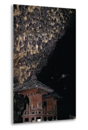 Rousettus Fruit Bats at Goa Lawah Bat Cave Temple, Bali. Indonesia