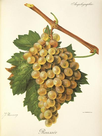 Roussee Grape-J. Troncy-Giclee Print