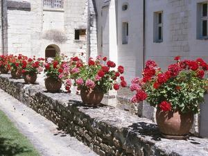 Row of Blooming Geraniums in Clay Pots