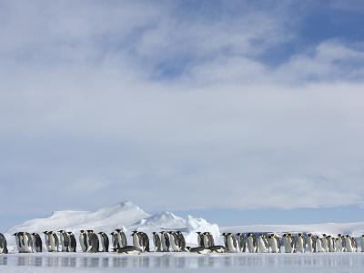Row of Emperor Penguins in Antarctica-Paul Souders-Photographic Print