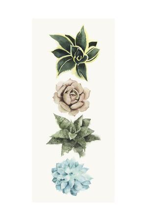 https://imgc.artprintimages.com/img/print/row-of-succulents-i_u-l-q11khjp0.jpg?p=0
