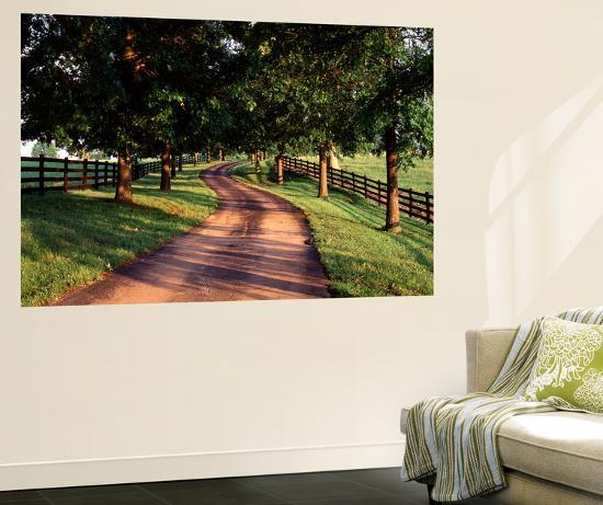 Row of Trees and Country Lane at Dawn, Bluegrass Region, Kentucky, USA-Adam Jones-Wall Mural
