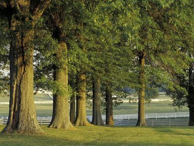 Row of Trees and Fences at Sunrise, Kentucky Horse Park, Lexington, Kentucky, USA-Adam Jones-Photographic Print