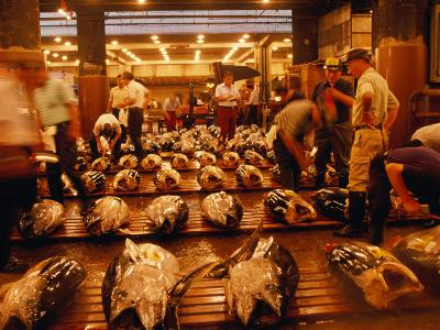 Rows of Giant Tuna for Sale at Tsukiji Central Fish Market, Tokyo, Japan-Oliver Strewe-Photographic Print