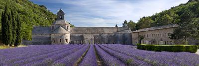 Rows of Lavender, Abbaye De Senanque Near Gordes, Luberon, Provence, France-Brian Jannsen-Photographic Print