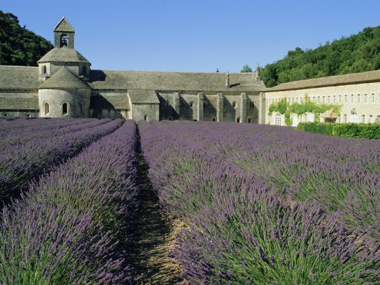 Rows of Lavender at the Abbaye De Senanque, Vaucluse, Provence, France, Europe-Bruno Morandi-Photographic Print