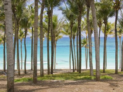 Rows of Palm Trees Line a Tropical Beach in Cancun, Mexico-Mike Theiss-Photographic Print