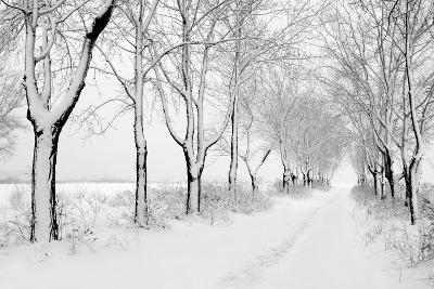 Rows of Snowbound Trees in the Park-pavel klimenko-Photographic Print
