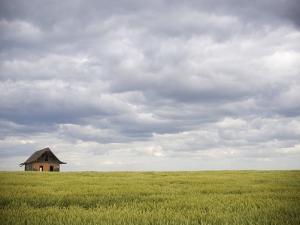 Barley Field and Abandoned Farmhouse, Raymore, Saskatchewan, Canada by Roy Ooms