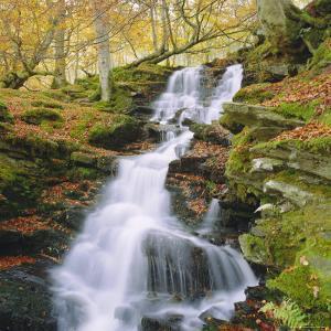 Birks of Aberfeldy, Tayside, Scotland, UK, Europe by Roy Rainford