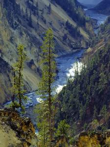 Grand Canyon, Yellowstone National Park, Unesco World Heritage Site, USA by Roy Rainford