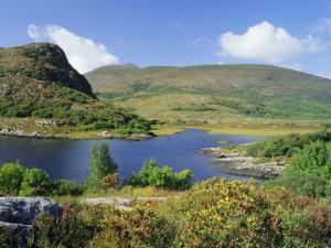 Ring of Kerry, Between Upper Lake and Muckross Lake, Killarney, Munster, Republic of Ireland (Eire) by Roy Rainford