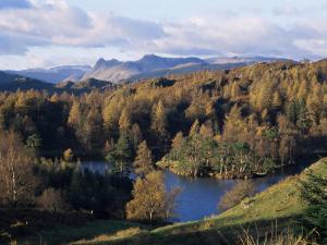Tarn Hows, Lake District National Park, Cumbria, England, United Kingdom by Roy Rainford