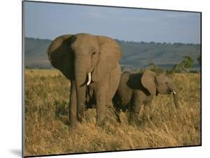 A Female Elephant with Her Baby on a Masai Mara Plain by Roy Toft