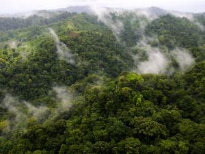 Aerial View of Rainforest with Clouds, Costa Rica by Roy Toft