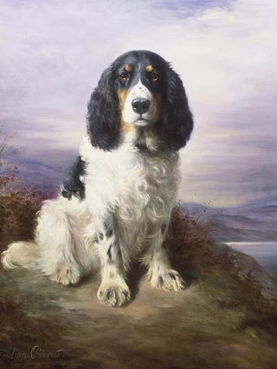 Royal, a Tri-Colour Working Springer Spaniel-Lilian Cheviot-Giclee Print