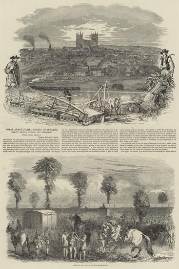 Royal Agricultural Society of England--Giclee Print