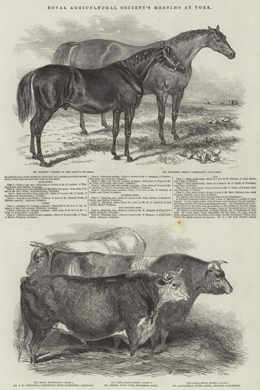 Royal Agricultural Society's Meeting, at York--Giclee Print