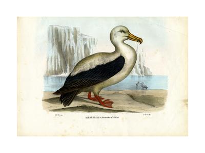 Royal Albatross, 1863-79-Raimundo Petraroja-Giclee Print