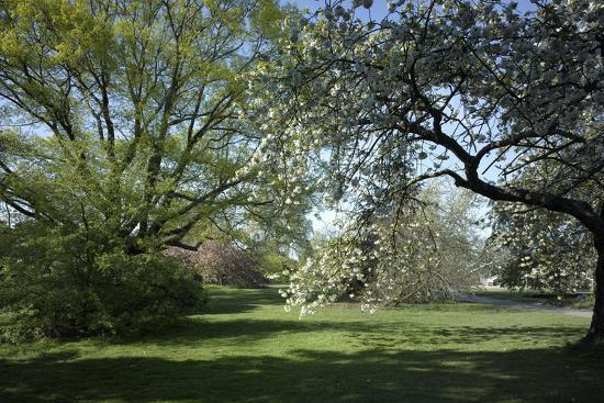 Royal Botanical Gardens, Kew, London. Spring-Richard Bryant-Photographic Print