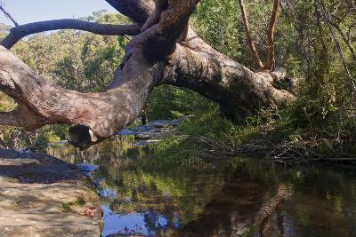 Royal Coast National Park near Sydney-Ryszard Stelmachowicz-Photographic Print