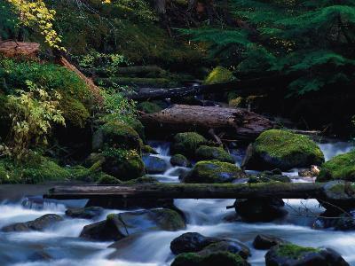 Royal Creek, OR-Frank Staub-Photographic Print