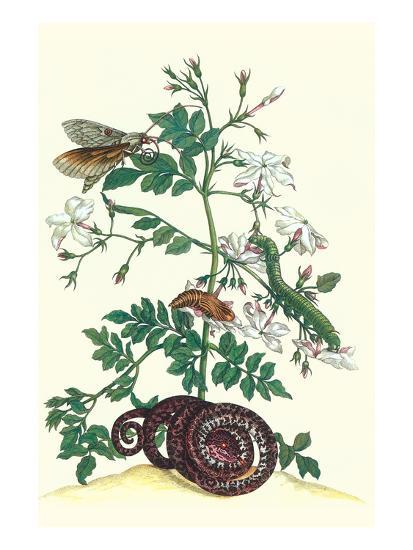 Royal Jasmine with an Amazon Tree Boa and an Ello Sphinx Moth-Maria Sibylla Merian-Art Print