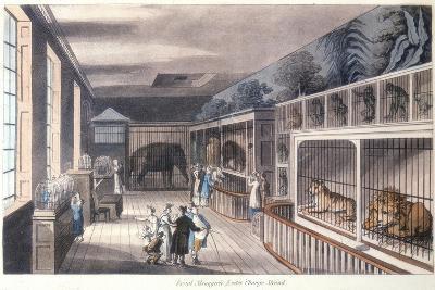 Royal Menagerie, Exeter Change, Strand, London, C1820-Thomas Rowlandson-Giclee Print
