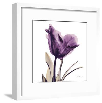 Royal Purple Parrot Tulip-Albert Koetsier-Framed Art Print
