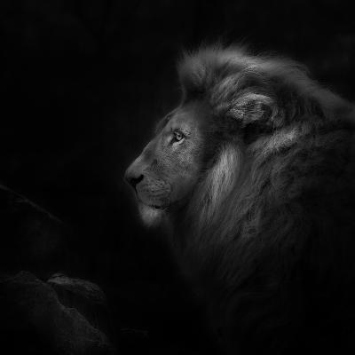 Royalty-Ruud Peters-Photographic Print