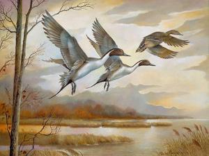 Pintails by Ruane Manning