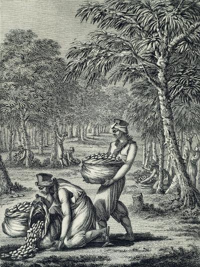 Rubber Harvesting--Giclee Print
