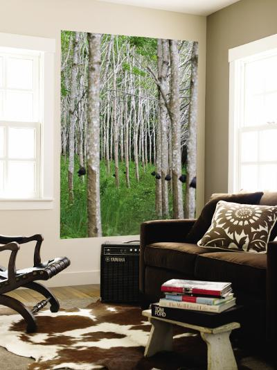 Rubber Trees-Austin Bush-Wall Mural