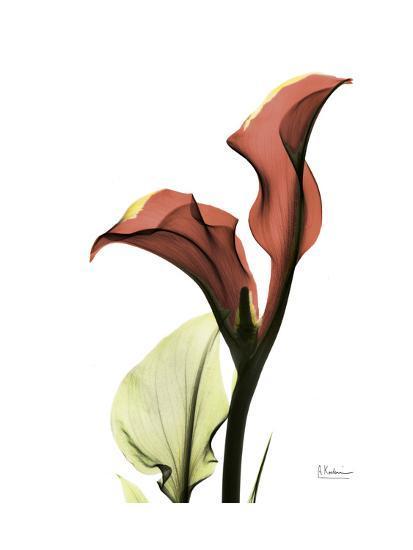 Ruby Calla Lily-Albert Koetsier-Premium Giclee Print