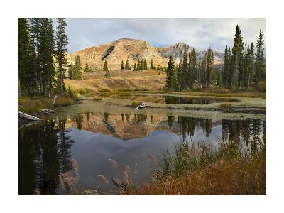 Ruby Range reflected in pond, Raggeds Wilderness, Colorado-Tim Fitzharris-Art Print