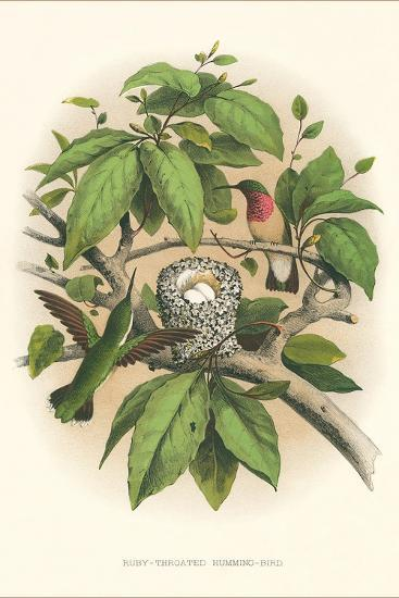 Ruby-Throated Hummingbird Nest and Eggs--Art Print