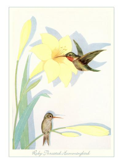 Ruby-Throated Hummingbirds, Illustration--Art Print