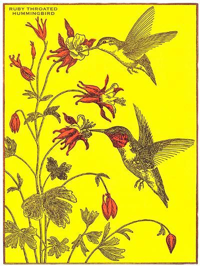 Ruby-Throated Hummingbirds-Found Image Press-Art Print