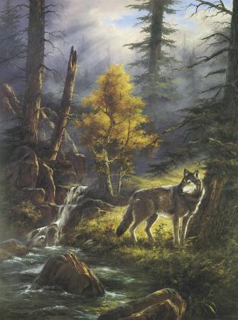 rudi-reichardt-timber-wolf
