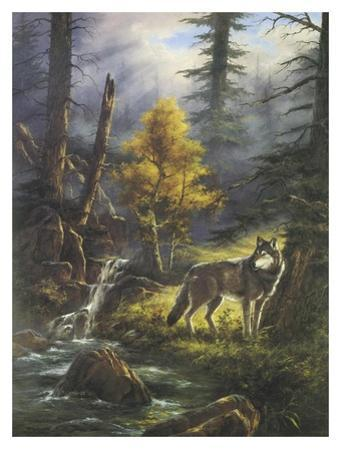 Timber Wolf by Rudi Reichardt