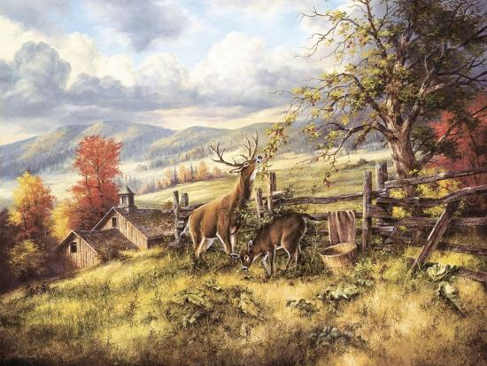 rudi-reichardt-white-tailed-deer